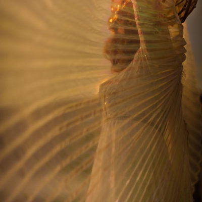 2012_gran_sfilata_inaugurale_23