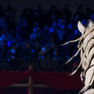 2012_spettacolo_i_cavalli_di_roma_12