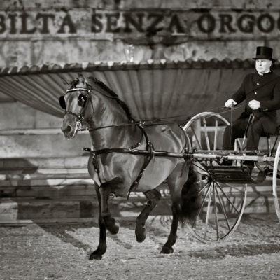 2012_spettacolo_i_cavalli_di_roma_128