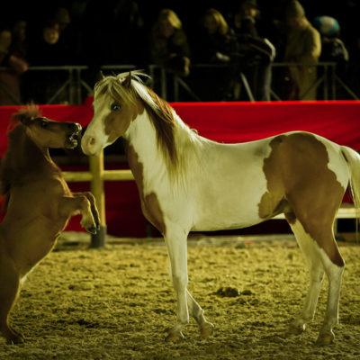 2012_spettacolo_i_cavalli_di_roma_137