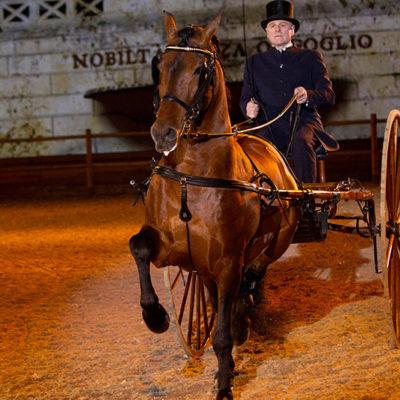 2012_spettacolo_i_cavalli_di_roma_29
