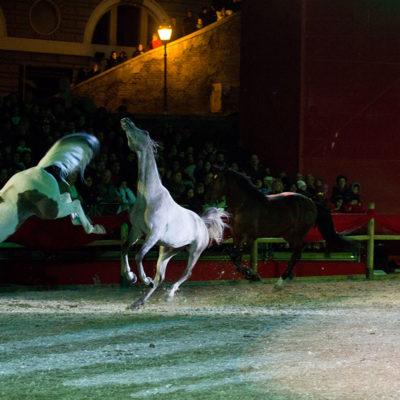 2012_spettacolo_i_cavalli_di_roma_305
