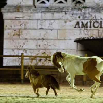 2012_spettacolo_i_cavalli_di_roma_306