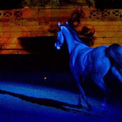 2012_spettacolo_i_cavalli_di_roma_316