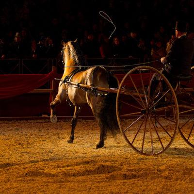 2012_spettacolo_i_cavalli_di_roma_35