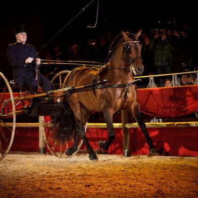 2012_spettacolo_i_cavalli_di_roma_70