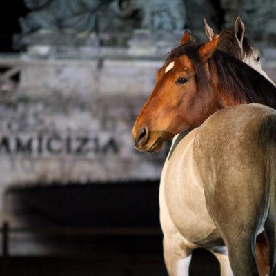 2012_spettacolo_i_cavalli_di_roma_78