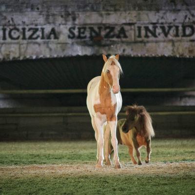 2012_spettacolo_i_cavalli_di_roma_80